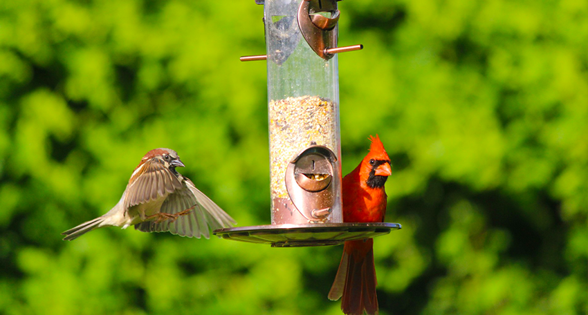 Chemung Valley Audubon Society